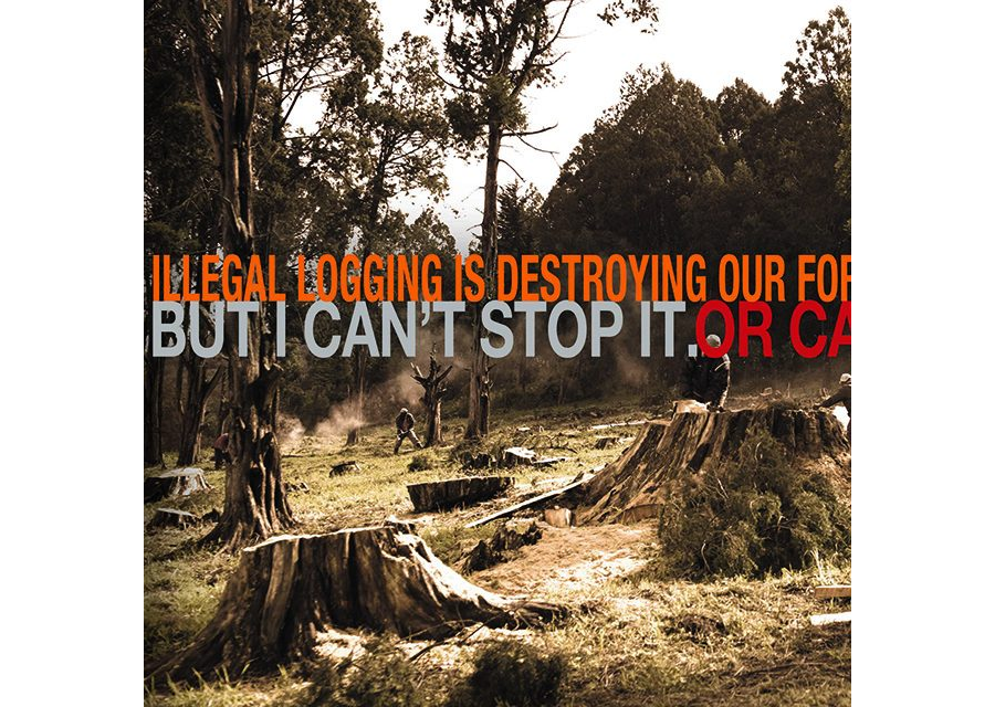 Ni Sisi - Logging
